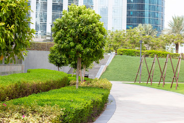 green tree in a park, Dubai United Arab Emirates