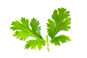 Fresh green parsley