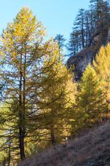 Autunno in Valsavarenche, Parco Nazionale del Gran Paradiso, Aosta, Valle d'Aosta, Italia