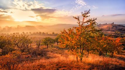 Goldene Stunde an der Teufelsmauer im Herbst (nahe Weddersleben) / Golden light at devil's wall near Weddersleben