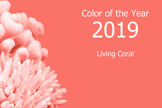 Living Coral color of the Year 2019. Trendy color.