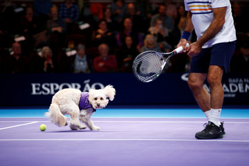 Dogs from the charity 'Canine Partners' act as ball boys during Champions Tennis match in London