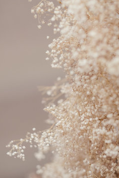 dry soft branches with tiny white flowers in blur. natural plant decor