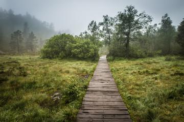 Swamp wooden path walkway to Trolltunga Norway