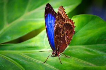 Short lived Beauty in a Butterfly