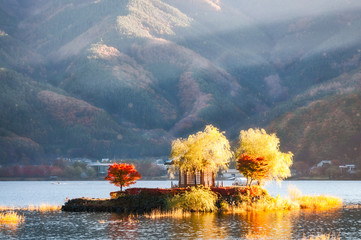 Bright morning sun on a small island at Lake Kawaguchi, Japan.