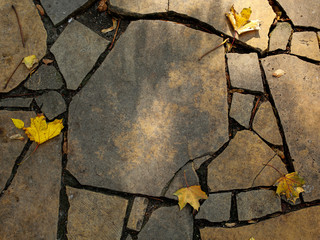 stone pavement with autumn leaves