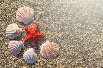 Red starfish and shells arranged on sand at the beach