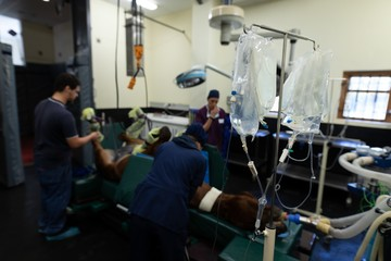 Surgeons operating a horse in operation theatre
