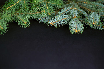 Spruce branches for Christmas on dark background