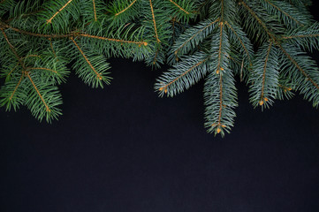 Several Christmas spruce branches on dark background