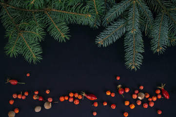 Spruce branches, red berries and hazelnuts on dark background