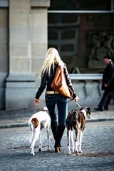 Blonde Frau mit  Windhunden