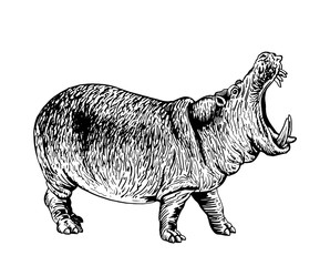 Graphical hippo isolated on white,vector tattoo illustration