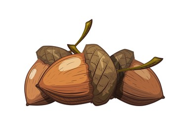 Group of acorns in the shell on a white background. Color drawing in cartoon style. Vector illustration of oak seeds.