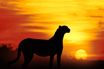 silhouette of a cheetah at sunset