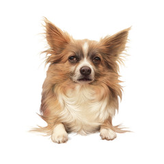 Realistic drawing of Papillon dog, butterfly-like look, Toy Spaniel. Cute puppy isolated on white background. Hand drawn illustration of Dog. Animal art collection for pet shop. Design template