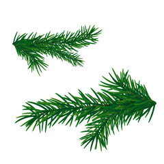 Christmas tree branch. Fir branch isolated.