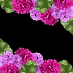 Beautiful floral background of pelargonium