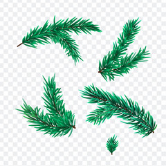 Christmas Fir tree branches isolated on transparant background