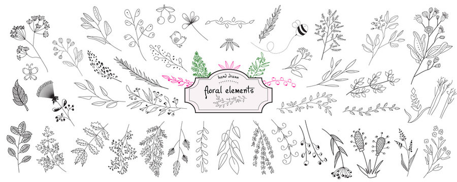 Hand drawn collection of rustic and floral design elements. Tree branches, flowers, plants and leaves ink silhouettes. Isolated vector on white background