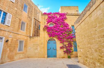 The stone house with climbing bougainvillea bush, Mdina fortress, Malta