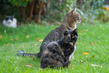 zwei junge  sitzende Katzen auf einer Wiese  mit Herbstlaub