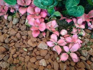 Flower bloomvol.21