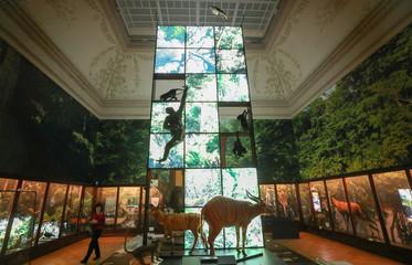 Stuffed animals are seen in Belgium's Africa Museum in Tervuren