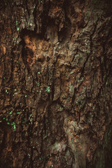 texture of the bark