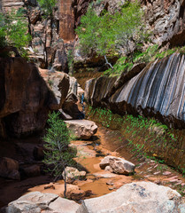 Flowing stream and trees in desert sandstone canyon; Water Canyon, Hildale UT