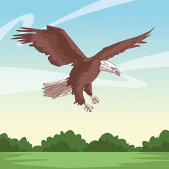 wild eagle body cartoon