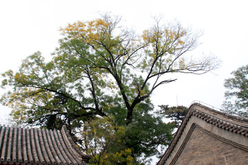 Chinese style buildings and trees