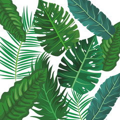 Tropical leaves isolated