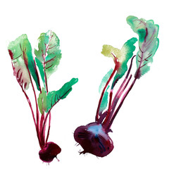 Watercolor illustration of beetroot, banner with beetroot, Beet with leaves, set of vegetables.