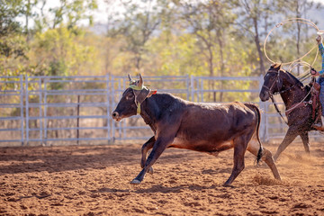 Calf Roping Event At Country Rodeo
