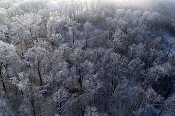 aerial drone view with snowy forest in winter season