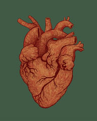 Human Heart. Hand Drawn Engraved Style. Vector Illustration