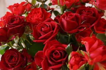 赤い バラ いっぱい マクロレンズ