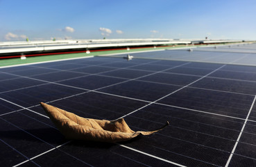 Dry Leaf on Solar Panel Surface