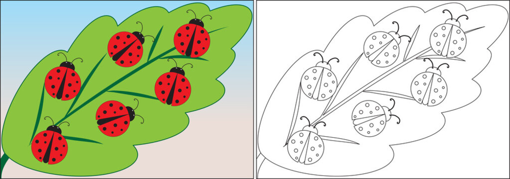 Coloring book for children. Ladybugs cartoon on leaf. Vector illustration.