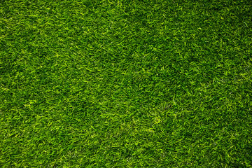 Green wall and green floor background.fresh spring green grass.