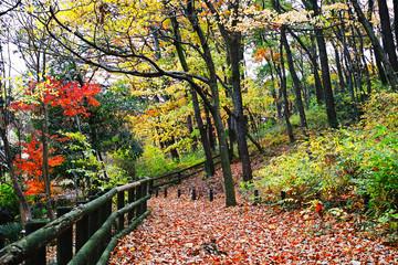 自然公園の明るい雑木林の紅葉