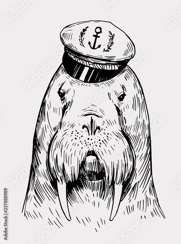 4b757740 Sketch of a walrus in a captain's cap. Hand drawn illustration converted to  vector
