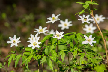 wild random flowers blooming in nature