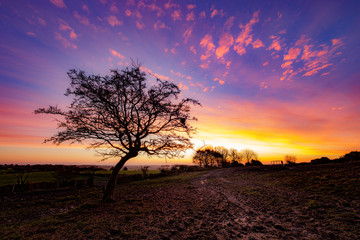 Sunrise behing a hawthorn tree