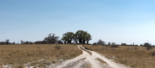 Sand Road with the Baines Baobabs at Nxai Pan National Park, Botswana