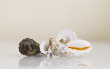 Interior. Seashells on a white table
