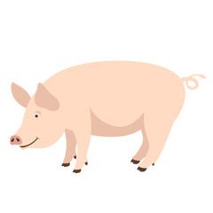 cartoon pig , vector illustration ,flat style ,profile