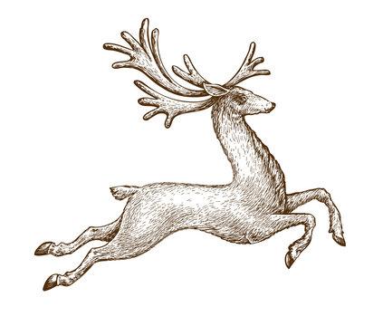 Running deer. Drawn vintage sketch vector illustration